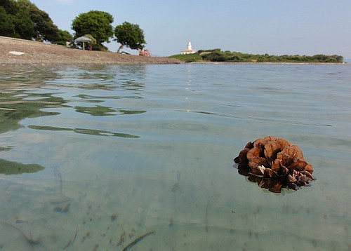Acorn in the Sea