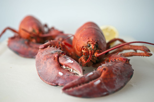 lobsters, steamed and red