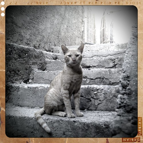 Cat By Retro Camera !