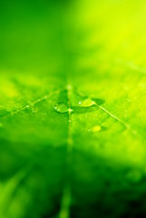 [Free Image] Flower / Plant, Leaf, Green, Drop, 201108020700