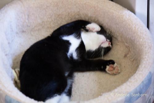 Oscar Takes a Nap-2.jpg