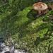 Mushroom and Moss 2