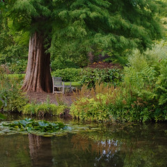 (Skink74) Tags: uk england reflection tree 20d water garden bench waterlily seat hampshire canoneos20d ferns longstock nikkor35f14 leckfordwatergardens nikkor35mm114ai