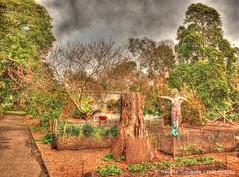 HDR Botanical Gardens