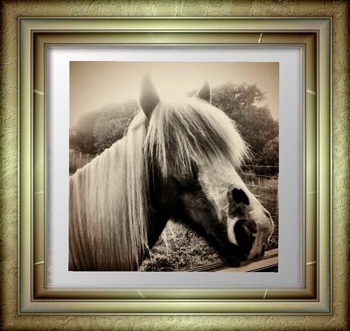 Horse Portrait by bichonphoto
