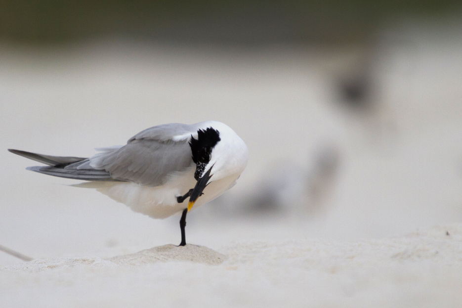 072811_beachbird02