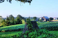 Summer in the County (gabi-h) Tags: trees houses summer ontario grass branches barns stump fields princeedwardcounty gabih