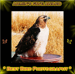 Best Bird Photography
