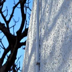 entanglement (SteffenTuck) Tags: morning blue light white tree texture concrete outside grey shadows exterior render brisbane steffentuck