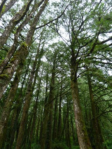 自然演替的森林。