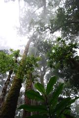 (Wiley Brooks-Joiner) Tags: costa mist fog forest vines rainforest rica treeline