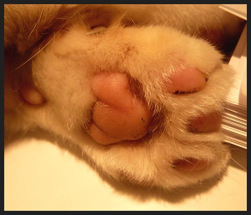 [27/52] Cat's Paw by kcm76