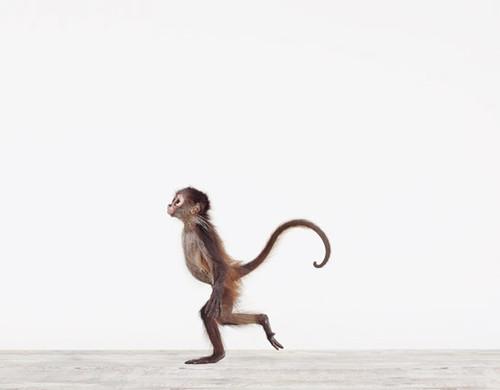 Baby-Monkey02_545-01