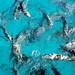 Milhares de peixes nadando ao nosso lado