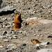 E as Marmotas!!!