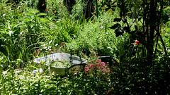 Jardin (Nob') Tags: flowers france flower garden photography photo jardin tourist monet flies nnuphar francia giverny nob waterflower