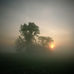 Sunrise Through The Mist (Arunas S) Tags: morning trees usa colour tree art nature fog sunrise square landscape illinois artistic foggy dupage calm naperville sunup dunkindonuts 5am chicagoland tranquillity arunas route59 sonydscr1 saultekis micarttttworldphotographyawards micartttt dragondaggerphoto dragondaggeraward redmatrix coppercloudsilvernsun michaelchee