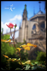Rose at Notre Dame (inneriart) Tags: paris notredame cathedral catholic religion old antique architecture building downtown gargoyles frightening terror scary documentary france europe trip traveltraveling people portrait foreign wholehannah inneriart hannahgalliinneri inneri hg raw photography saltlakecity freelance freelancer fineart nikond300s photoshopcs5 innereyeart inneri utah artist nikon adobe passion emotion amazing creative american unique inneriartcom httpinneriartcom