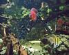 Neon Tetras (waterlily78) Tags: fish berlin nature germany zoo aquarium marine colorful europe bright exotic tropical aquatic neontetra