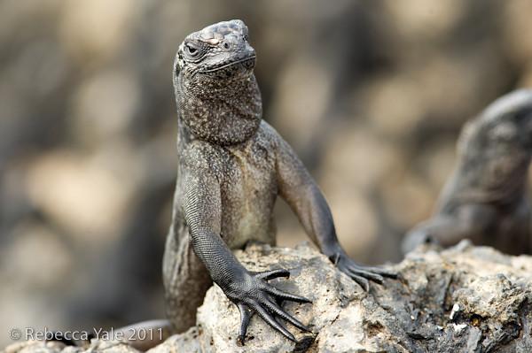 RYALE_Galapagos-58