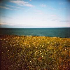 _cielo,mar y flores_ ([marta dez . fotografa]) Tags: mar lomo pelicula dianaf cantabria 120mm lomografia cantabrico cmaralomografica minerva77