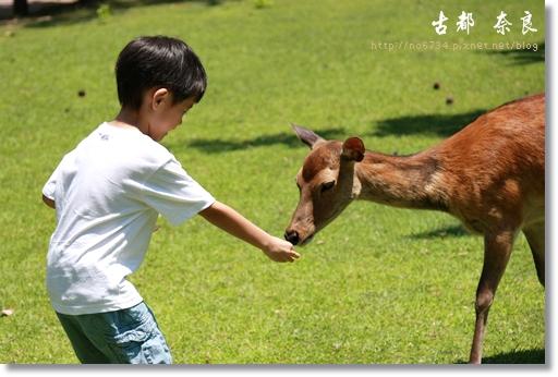 20110711_4thDay Nara_2429 f