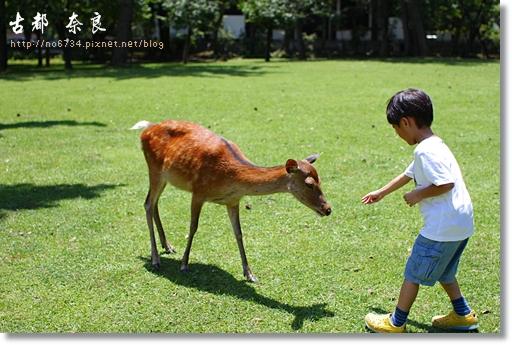 20110711_4thDay Nara _0324 f