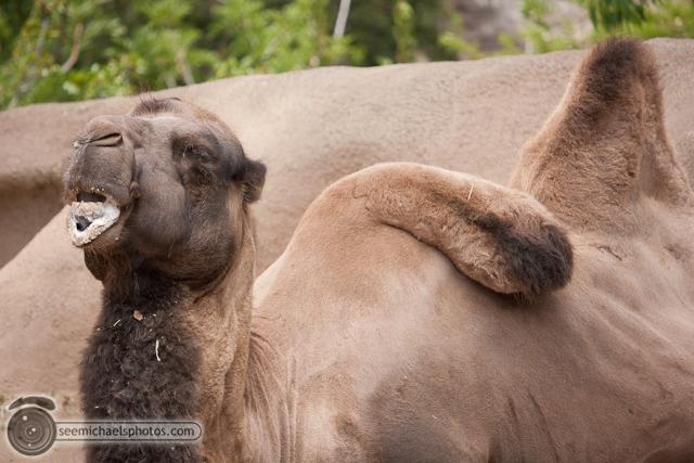 San Diego Zoo 72411 © Michael Klayman-015