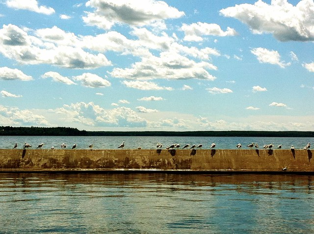 seagulls at the Waskesiu marina