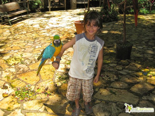 Blue Macaw Interaction Center For Kids
