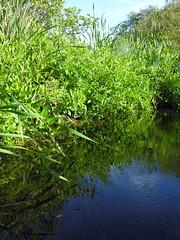 Between the ponds (jere7my) Tags: camp plants water canal kayak plymouth kayaking boating greenery passage folkdance northwestpassage secretpassage pinewoods dancecamp scottishdancing rscds pinewoodscamp