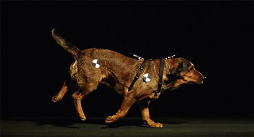 Nikolaus-Space-Time-Dog