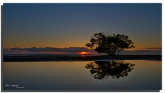 Friendship is like peeing on yourself: everyone can see it, but only you get the warm feeling that it brings. (Christolakis) Tags: tree silhouette sunrise australia brisbane queensland hdr canon1740l nudgeebeach canon7d oloneo