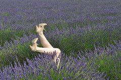 Lavender (Guy Tyler) Tags: cute fun highheels legs gorgeous leg lavender heels mayfield feetup highheeledshoes legsup legsintheair legsupintheair futab feetuptakeabreak mayfieldlavender helentyler helenanstee guytylerportfolio