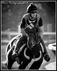(EASY GOER) Tags: horses sports canon saratoga racing athletes races equine thoroughbreds equines tbracing