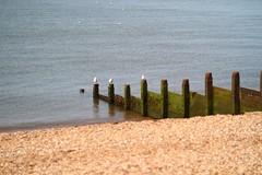 a beach and perch to themselves: Kentish seaside summer (JB photographer) Tags: summer england sun beach coast kent explore shore whitstable swale copyrightjonathanbarkerphotographer