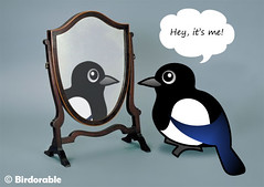 Magpie Mirror (birdorable) Tags: cute bird magpie birdorable