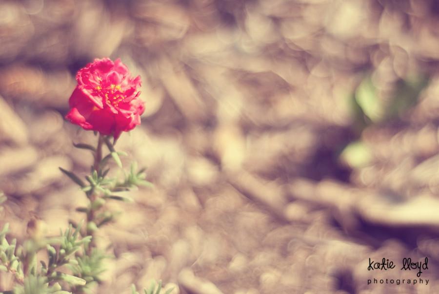 mystery-flower