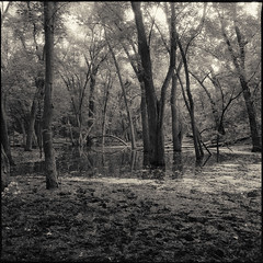 (Ansel Olson) Tags: park trees dog 120 6x6 mamiya tlr film minnesota forest mediumformat woods minneapolis delta 3200 ilford minnehaha c330 c330s mamiyasekor55mmf45