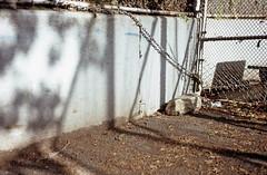 (andre dos santos) Tags: nyc newyorkcity newyork 120 film mediumformat fuji harlem manhattan rangefinder slide 100mm chrome fujifilm 6x9 medium format fujica astia 100f f35 astia100f g690bl fujinons