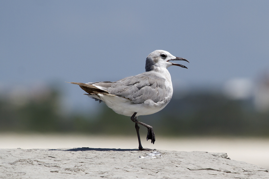 072811_beachbird07