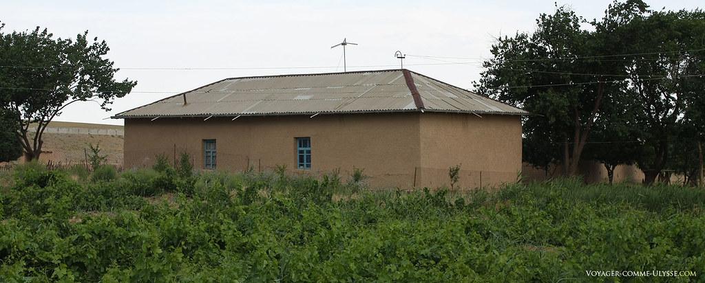 Culture de la vigne en Ouzbékistan