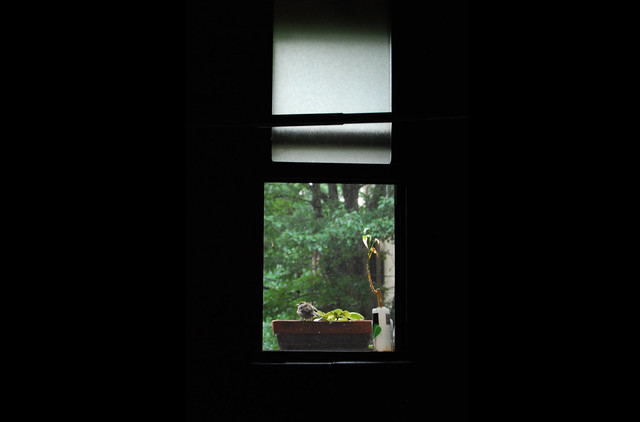 Bird in bathroom window