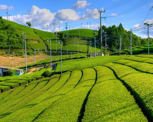 和束町の風景・茶源郷 by kisyu