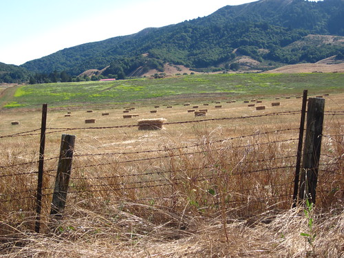 marin haystacks