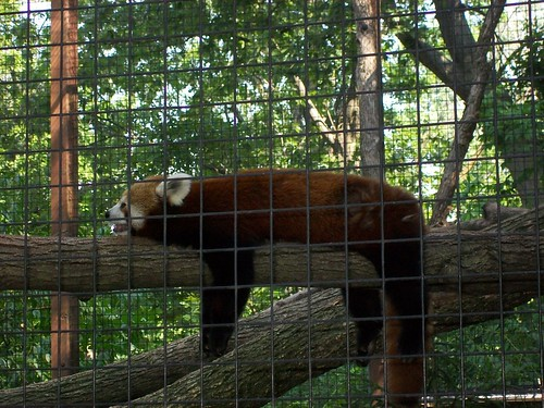 Zoo - 7-17-11 057