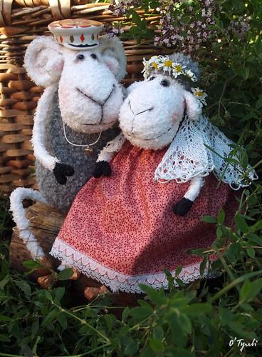 Sheeps13
