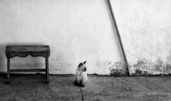 Kitty en su mundo.