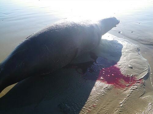 Sea Lion Venice Beach