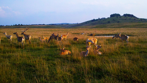 Bactrian and Sika Deer at sunset